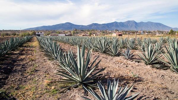 woher-stammt-tequila-blog-post